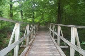 Wooden bridge going over creek