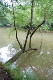 Fallen tree in the creek