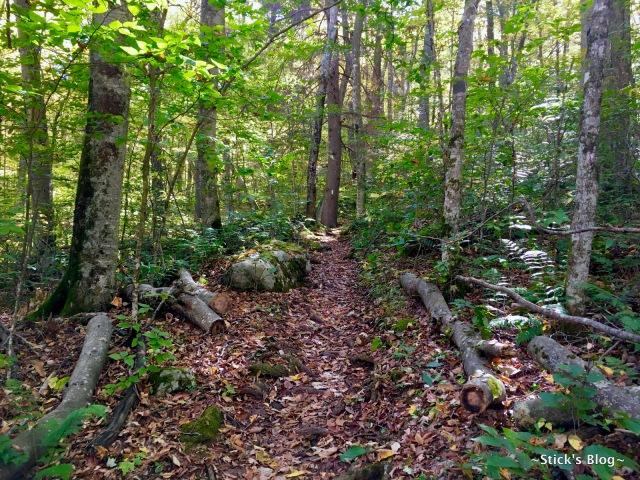 040-mt-rogers-hike-40