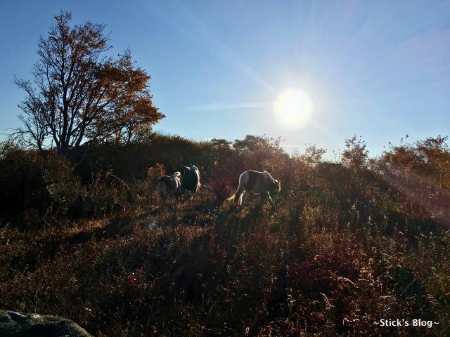 108-mt-rogers-hike-107